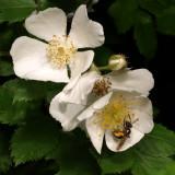 spring_13