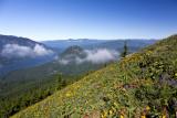 New: Dog Mountain 2013