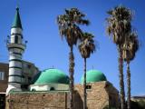 Mosquey green