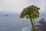 coastal growth