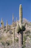 Cacti on alert