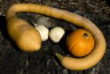 pumpkin embraced