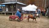horse_show