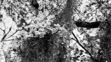 Narura Black&White