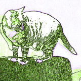 Miau Green
