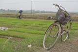 _1968. Rizieres au Nord Est d'Hanoi.jpg