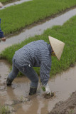 _1972. Rizieres au Nord Est d'Hanoi.jpg