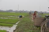 _1993. Rizieres au Nord Est d'Hanoi.jpg