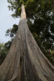 3314 Preah Khan.jpg