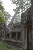 3343 Preah Khan.jpg