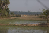 _3853 entre Siem Reap et le Lac Tonle Sap.jpg