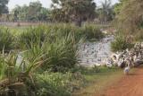 _3877 entre Siem Reap et le Lac Tonle Sap.jpg