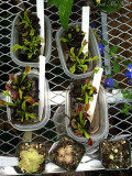Flytraps and butterworts