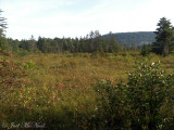 Cranberry Glades Botanical Area; Pocahontas Co., WV