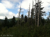 Mt. Mitchell, NC scenery