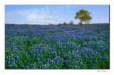 Wild Texas - Spring