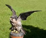 D3_2175 Peregrine Falcon.jpg