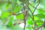 Flowerpeckers