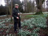 Snowdrops at Colesborne and Painswick 2014
