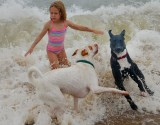 Dog Dancing in the Surf