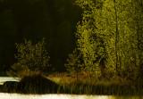 Svensk natur