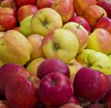 apples pdx_tn.jpg
