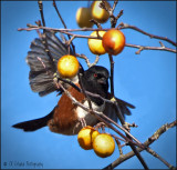 Tasty Towhee Treat