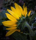 Plants - SUMMER - June, July, August