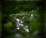 Water and drops