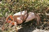 KrabbaCrab