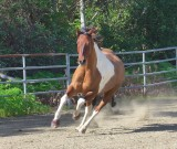 Dave & Linda's horses