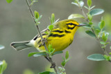 Birds of the USA