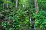 Fern Branch Falls 3