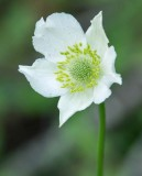 Thimbleweed 3