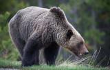 20130513_Alberta BC_0334.jpg