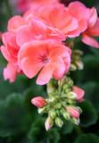 20130526_Country Garden_0019.jpg