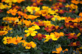 20130526_Country Garden_0078.jpg