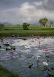 20130929_Laos_0318.jpg