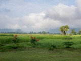 20130929_Laos_0324.jpg