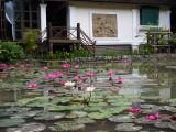 20130929_Laos_0355.jpg