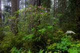 20150629_Redwood_0032.jpg