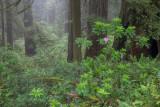 20150629_Redwood_0123.jpg