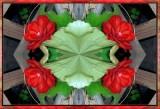 Begonia Quartet 2