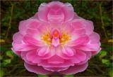 Paradise Fleurishes