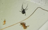 Black Widow and Lunch (over our front door)