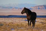 Black Stallion in an Empty Desert.