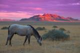 Desert and Mustang