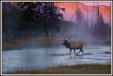 Elk dawn crossing with fog