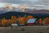 Horse and Barn - Como Peaks - Bitterroot Range - Montana