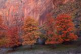 Fall at Big Bend